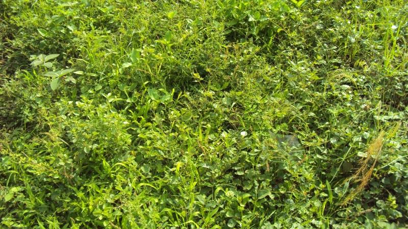 green-keeranur-1